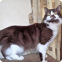 Adopt A Pet :: Rolo - North Wilkesboro, NC