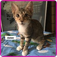 Adopt A Pet :: Aztec - Miami, FL