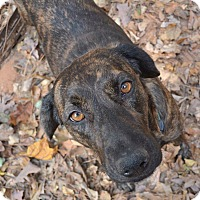 Adopt A Pet :: Mary Kate - Alpharetta, GA