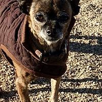 Adopt A Pet :: Carrie - Lancaster, CA