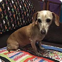 Adopt A Pet :: Azura - York, SC