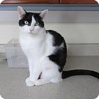 Adopt A Pet :: Natalia - Sterling, MA