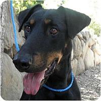 Adopt A Pet :: Aubrey - Fillmore, CA