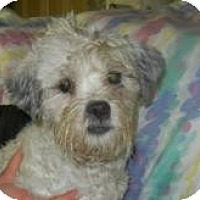 Adopt A Pet :: George Waggington ADOPTED!! - Antioch, IL