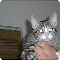 Adopt A Pet :: Clover - Lombard, IL