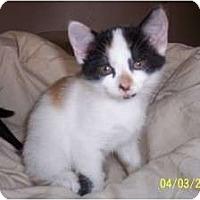 Adopt A Pet :: Clovis - Saint Albans, WV