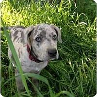 Adopt A Pet :: Dorothy - Richmond, VA