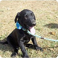 Adopt A Pet :: Waylon - Adamsville, TN