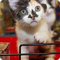 Adopt A Pet :: Ziva - Irvine, CA