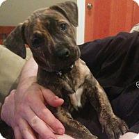 Adopt A Pet :: Kenickie - Atlanta, GA