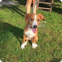 Adopt A Pet :: Butter 5mo Adopted - Mentor, OH