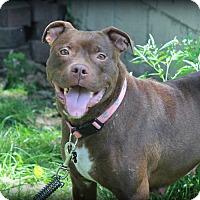 Adopt A Pet :: Mango - Eastpointe, MI