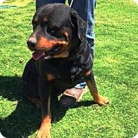 Adopt A Pet :: Billy Bob - Rancho Cucamonga, CA