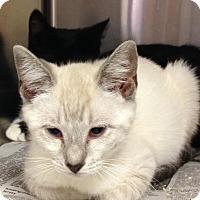 Adopt A Pet :: Francie - East Brunswick, NJ