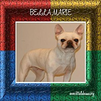 French Bulldog/Pug Mix Dog for adoption in Alabaster, Alabama - Bella Marie
