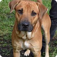 Adopt A Pet :: Marlon - Miami, FL