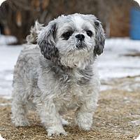 Adopt A Pet :: CHARLOTTE - Ile-Perrot, QC