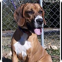 Adopt A Pet :: Neela - Wakefield, RI