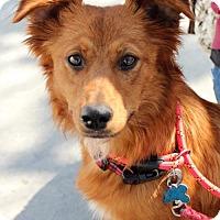 Adopt A Pet :: Moorea - Adopted! - San Diego, CA
