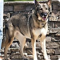 Adopt A Pet :: Madi - EMERGENCY !! - Inverness, FL