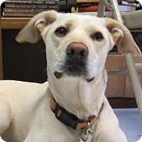 Adopt A Pet :: Zoe - Manchester, CT
