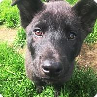Adopt A Pet :: Benny - rockford, IL