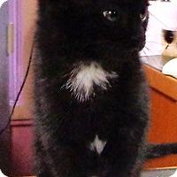 Adopt A Pet :: Blackie - Lebanon, PA