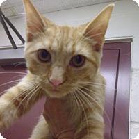Adopt A Pet :: Jessie - Muscatine, IA