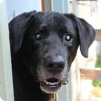 Adopt A Pet :: Diezel - Towson, MD