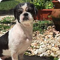 Adopt A Pet :: Lala - Windermere, FL
