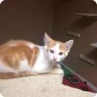 Adopt A Pet :: Tarzan - Bridgeton, MO