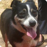 Adopt A Pet :: Della - Toronto, ON