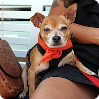 Adopt A Pet :: Paco! - New York, NY