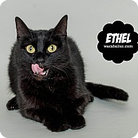 Domestic Longhair Cat for adoption in Wyandotte, Michigan - Ethel