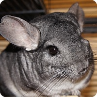 Adopt A Pet :: DR. HYDE - Boston, MA