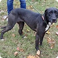 Adopt A Pet :: Raven - Livingston, TX