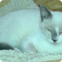 Adopt A Pet :: Dillian - Whittier, CA