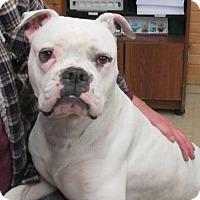 Adopt A Pet :: Lizzie - Reeds Spring, MO