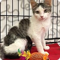 Adopt A Pet :: Sophie - Pasadena, CA