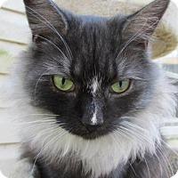 Adopt A Pet :: Smokey Joe - Colonial Beach, VA