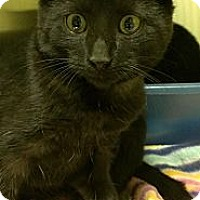 Adopt A Pet :: George Harrison - Richboro, PA