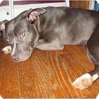 Adopt A Pet :: Pinkie - Reisterstown, MD