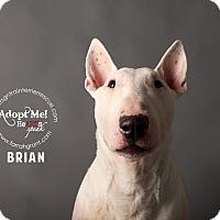 Adopt A Pet :: Brian - Omaha, NE