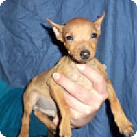 Adopt A Pet :: Sharp,Shaw,Toews,Kane,Bkickell - Antioch, IL