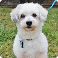 Adopt A Pet :: Charlie - Smyrna, GA
