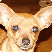 Adopt A Pet :: Hattie - MINNEAPOLIS, KS