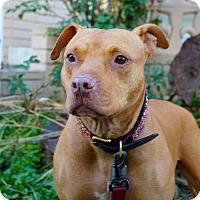 Adopt A Pet :: Xena!!!! - Loves kids! - Los Angeles, CA