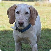 Adopt A Pet :: Jake - Westport, CT