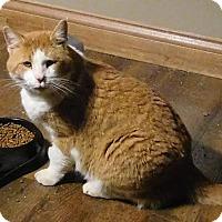 Adopt A Pet :: Oscar - Columbus, OH