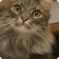 Adopt A Pet :: Ollie - Columbus, OH